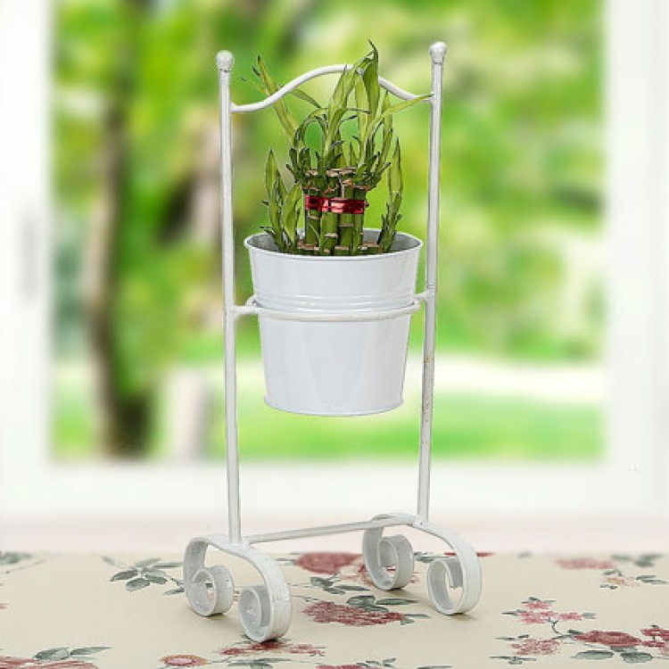 Lucky Bamboo Planter