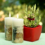 Lucky Bamboo With Scented Candles